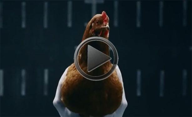 new mercedes ad with chickens. Black Bedroom Furniture Sets. Home Design Ideas